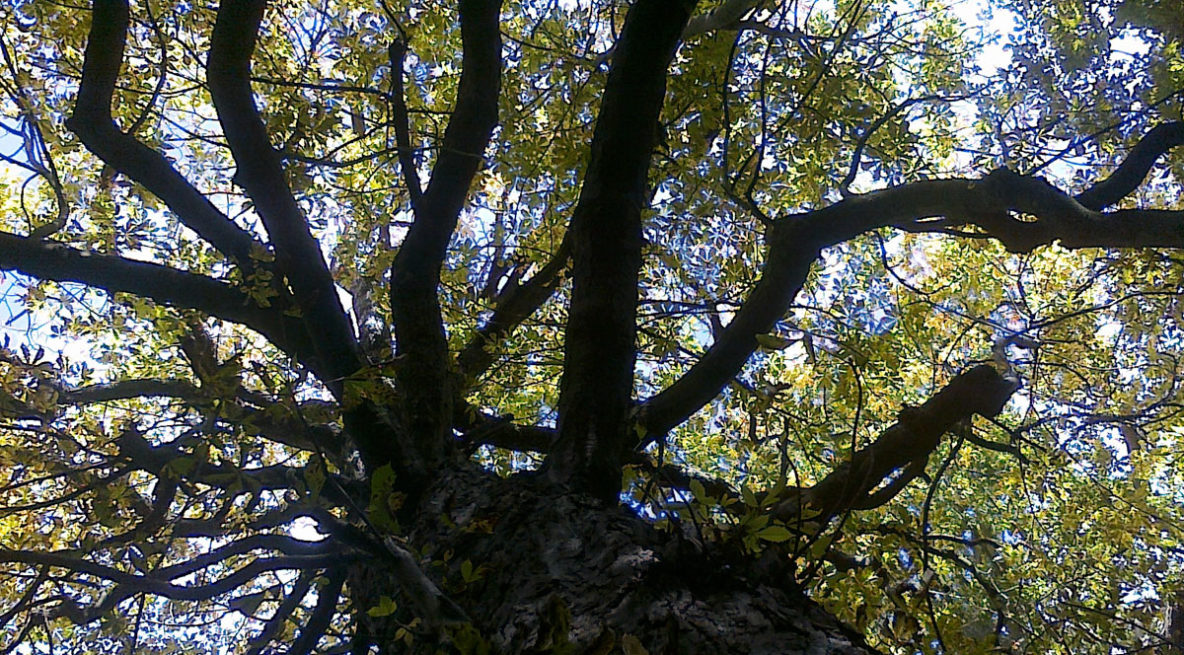 looking up into a tree